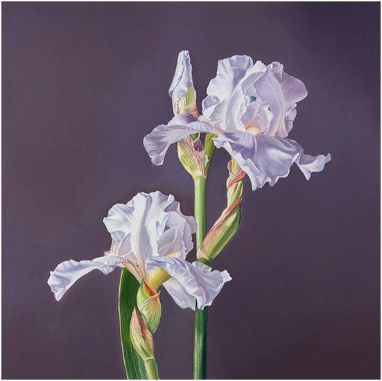 Iris, 20x20