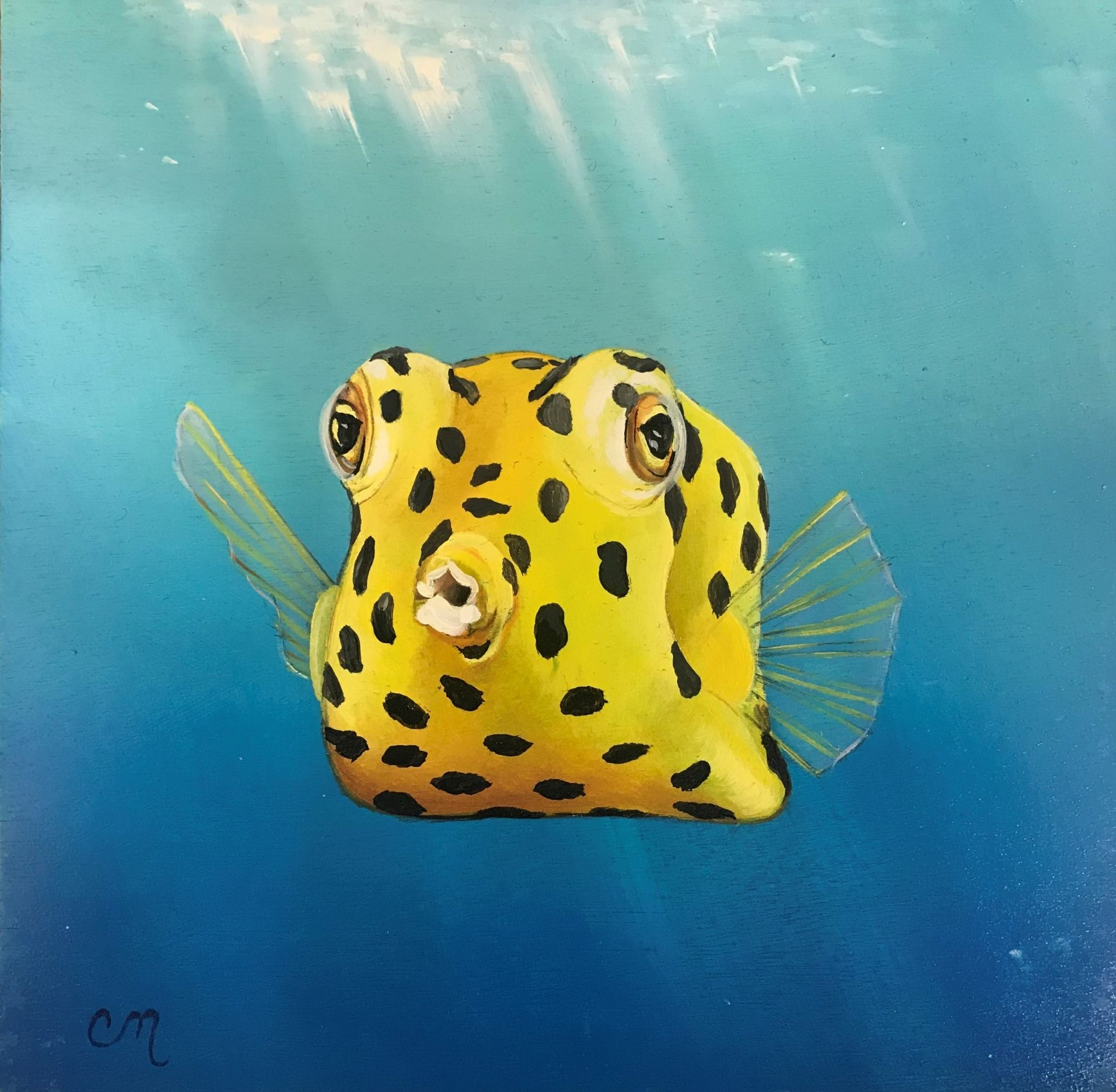 Box Fish, 8x8