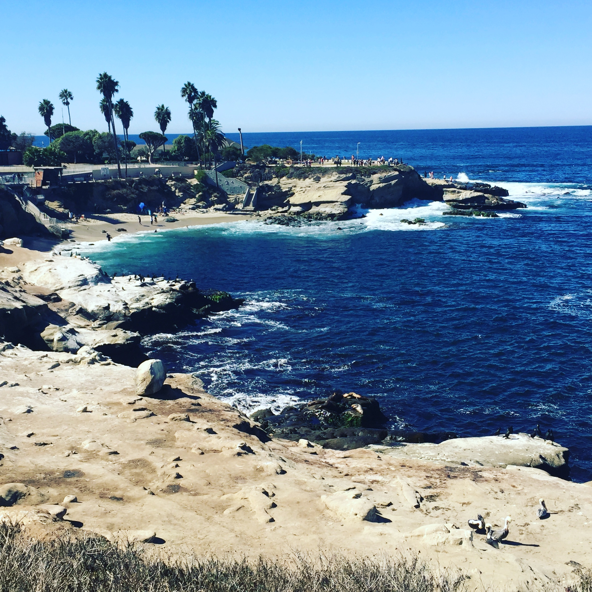 La Jolla Cove, right down the road from The Grounds.