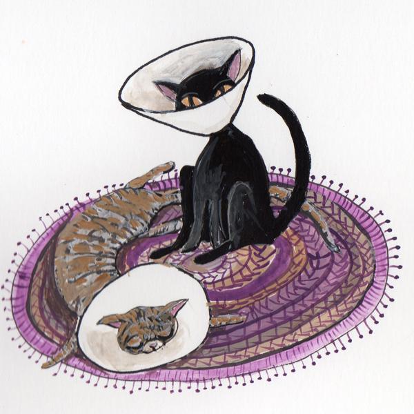 SS-Cats in Cones.jpg