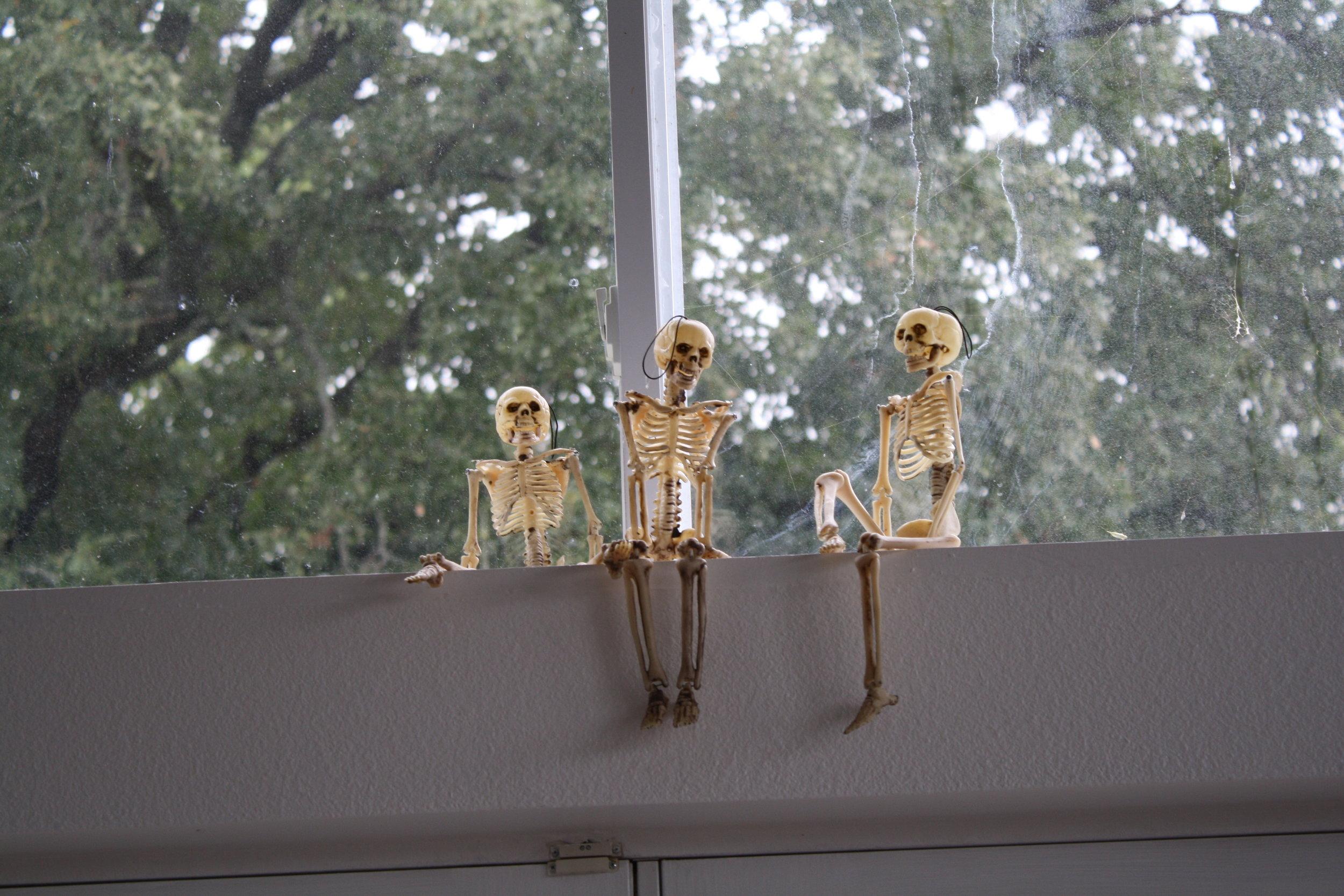 Halloween skeletons in the window