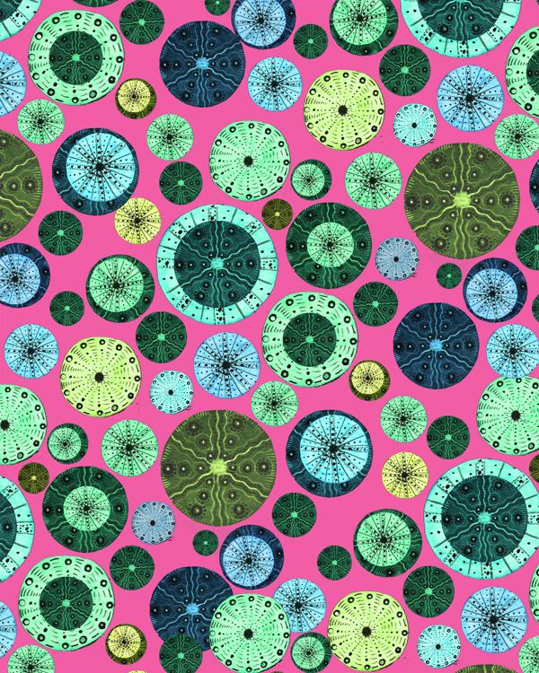 SS Hot Pink Urchins.jpg
