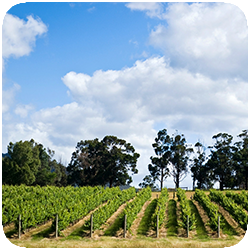 Tour 355 Puffing Billy & Wineries.png