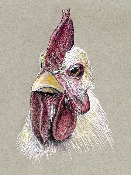 Chicken Sketch, Wild Harmony Farm, RI