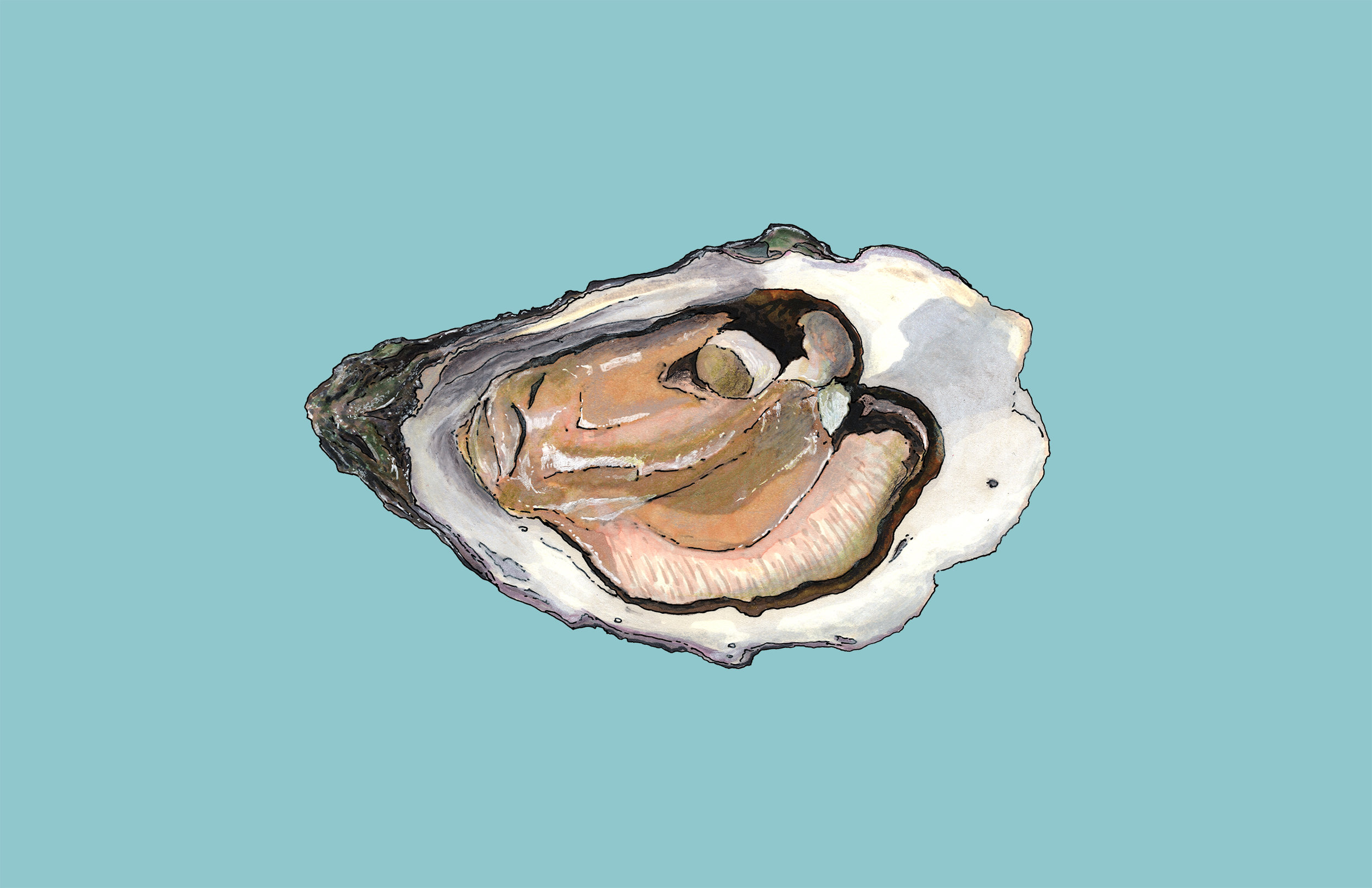 Oyster Sketch, Point Judith, RI