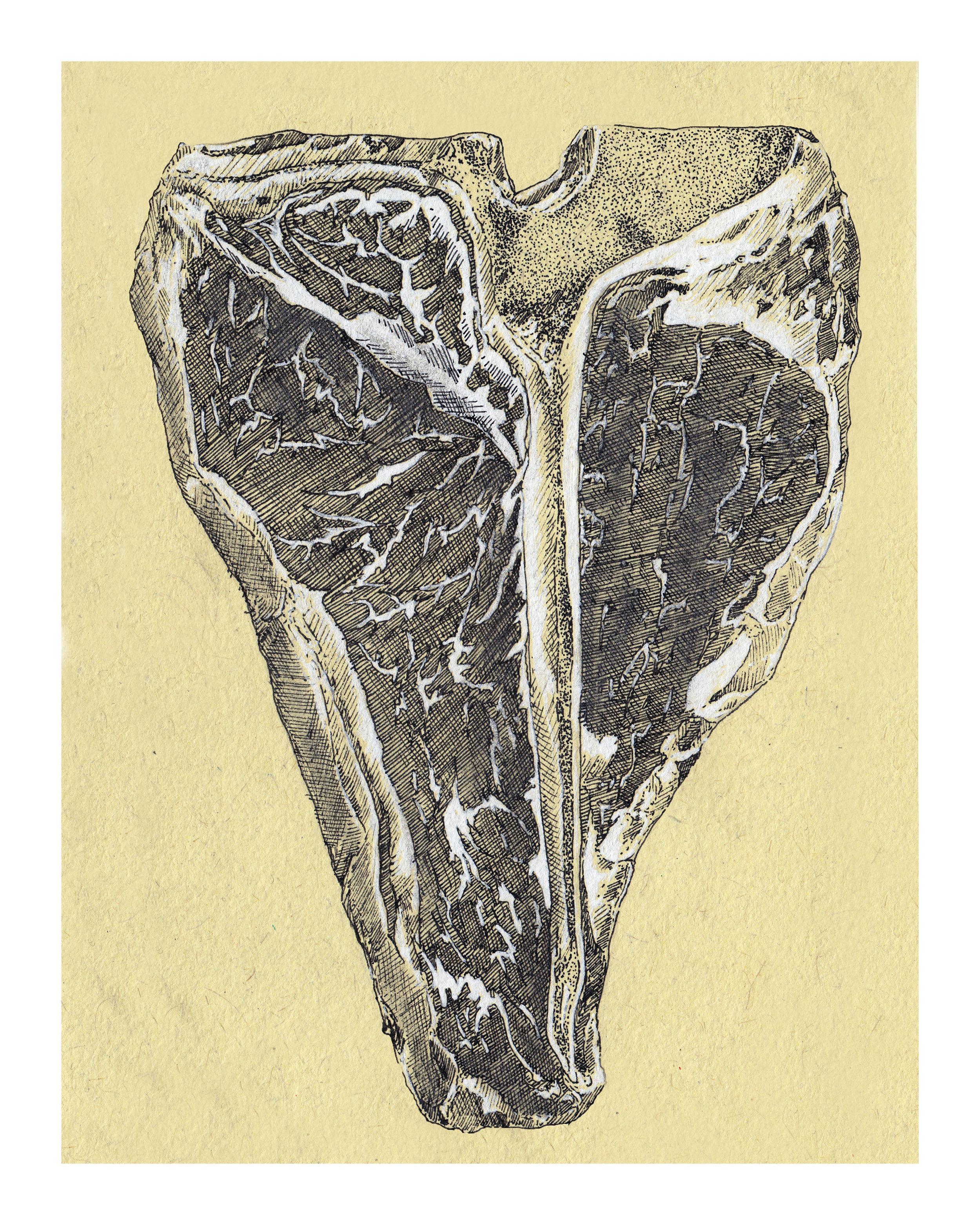 T-Bone sketch