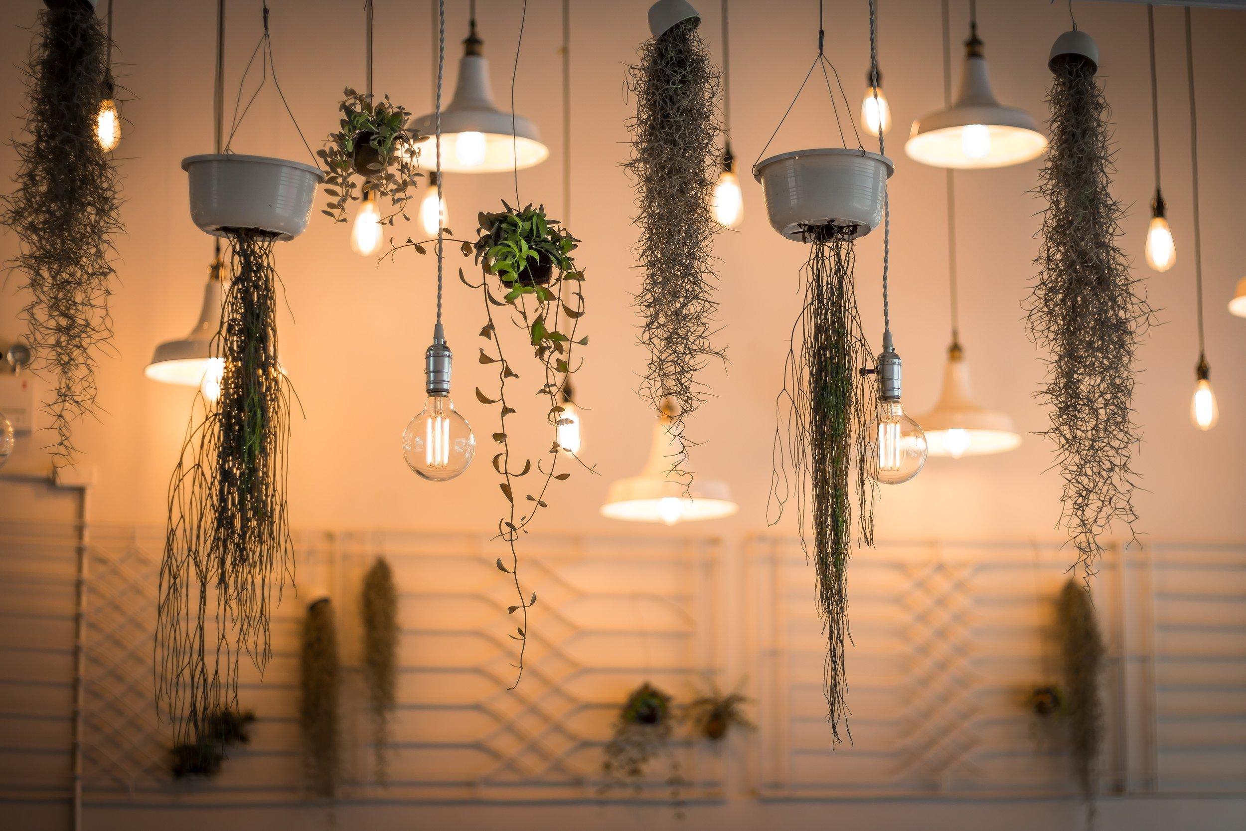 Plants + Lights.jpg