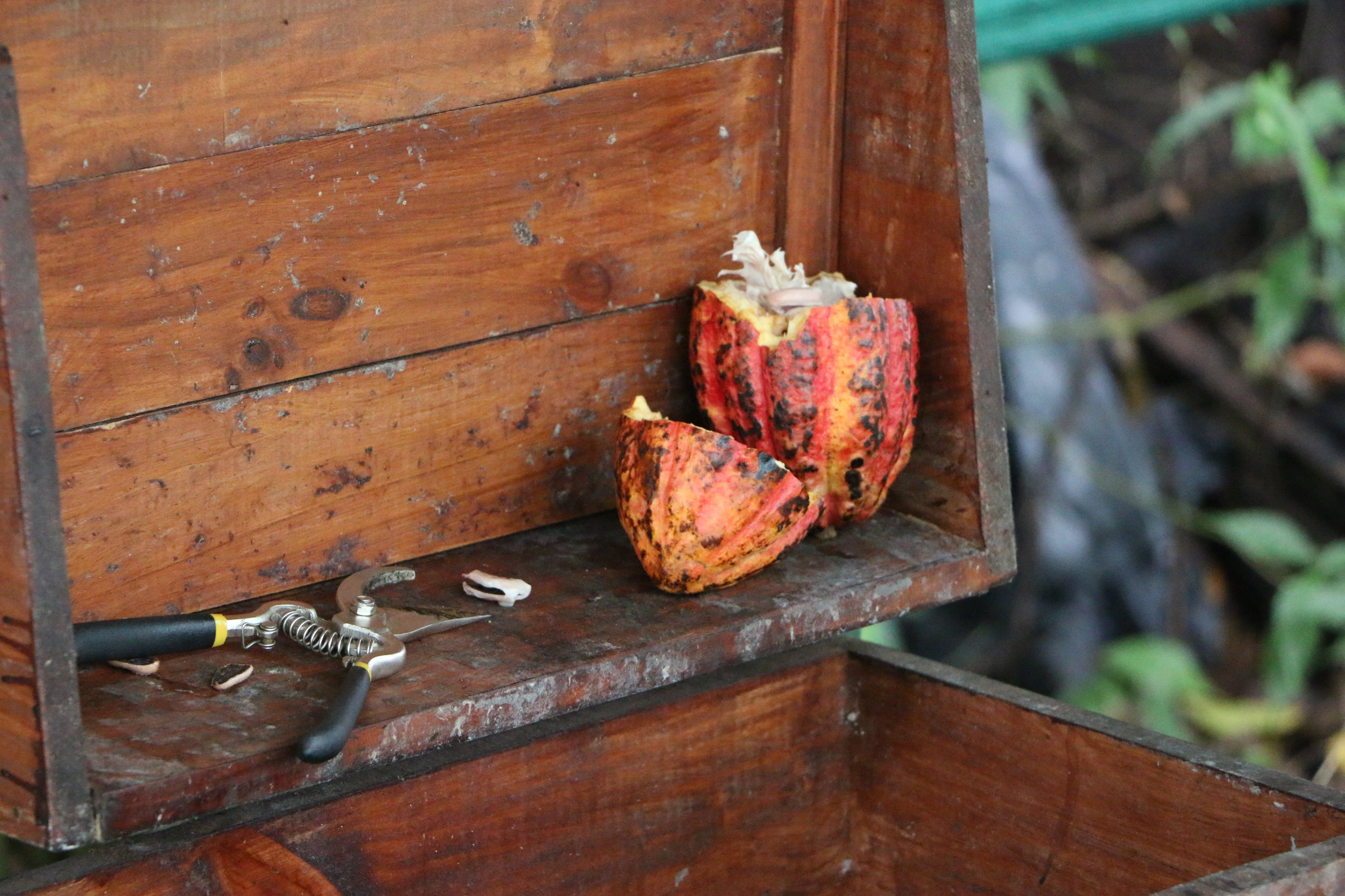 The raw fruit, cracked open before the seeds are harvested prior to fermentation.