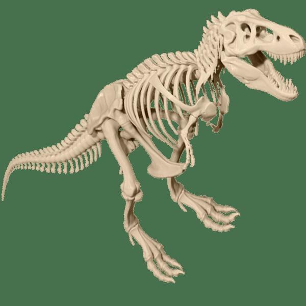 T-Rex-skeleton-dinasaur-model.png