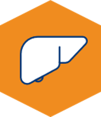 Liver Icon.png
