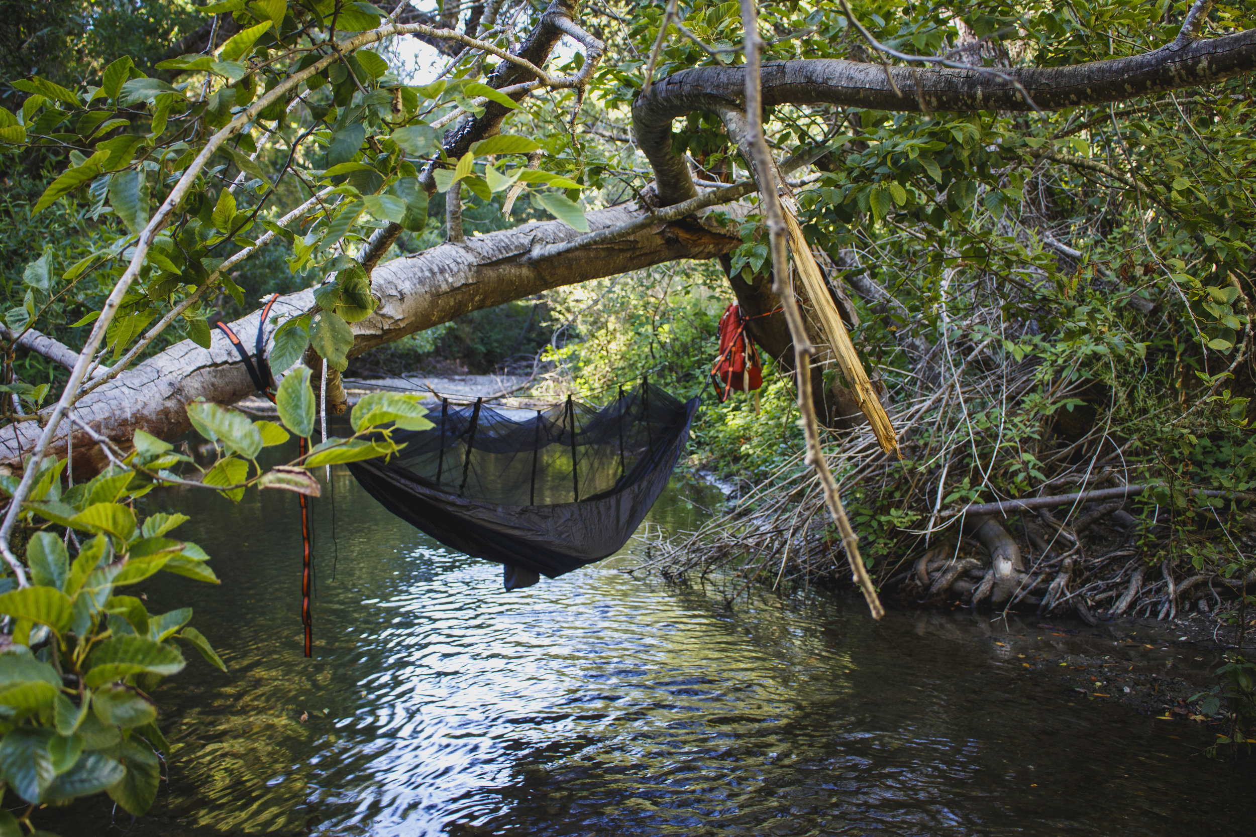 creek-hammock_2.jpg