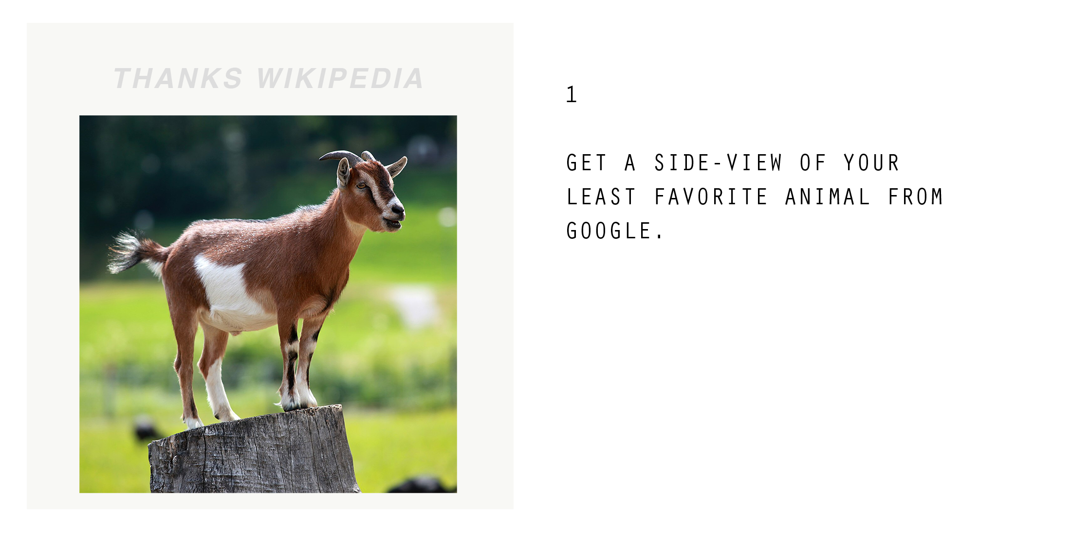goat-how-08.png