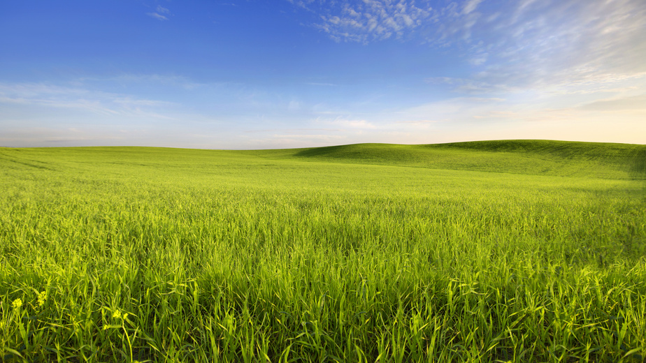 Emerald Grain Success story.jpg
