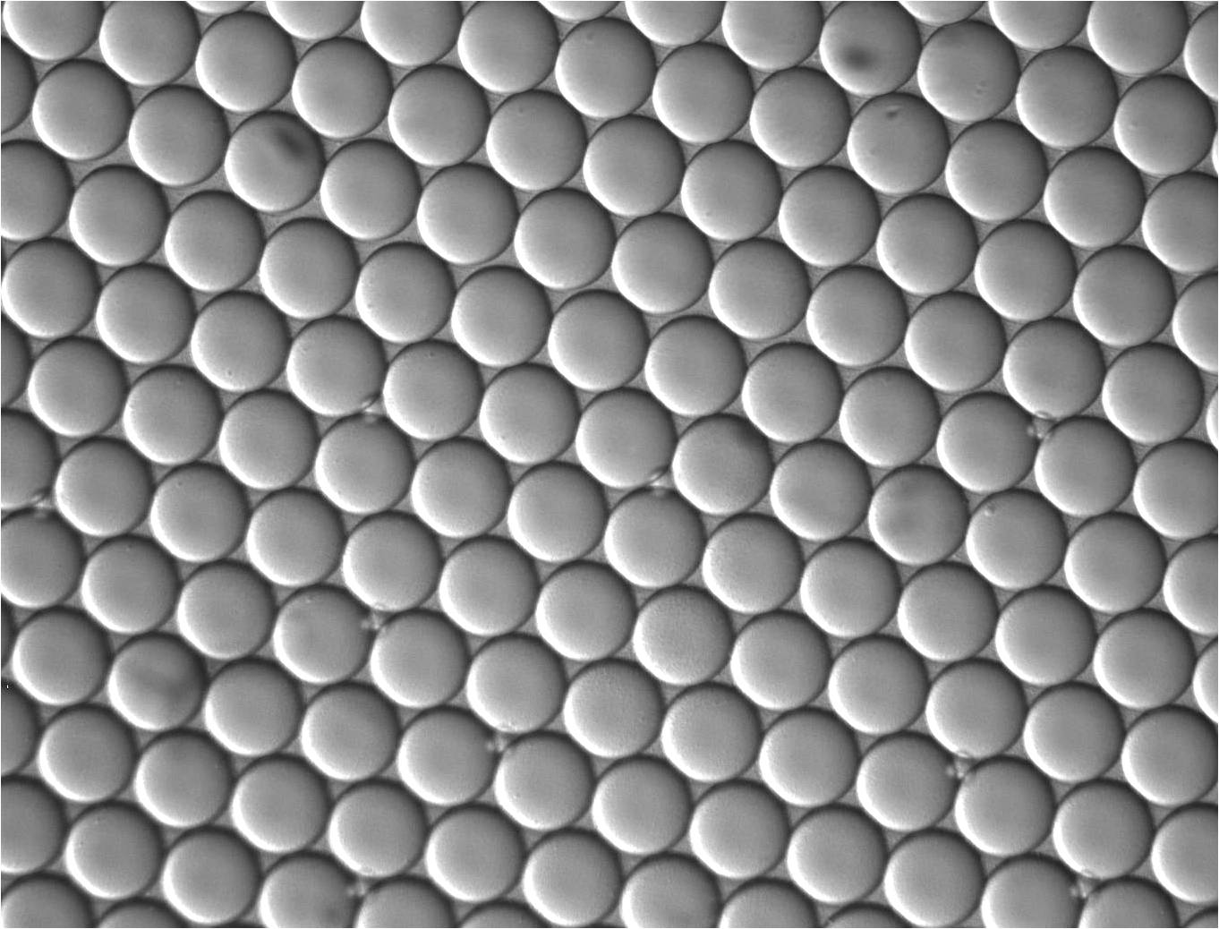 Hexagonally-packed microdroplets