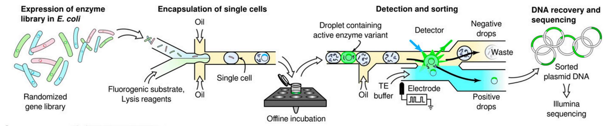 Overview of microfluidic screening workflow in droplets (from Romero  et al.  2015).
