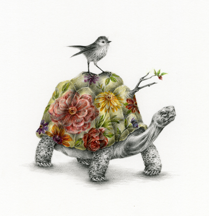 Tortoise and Bird