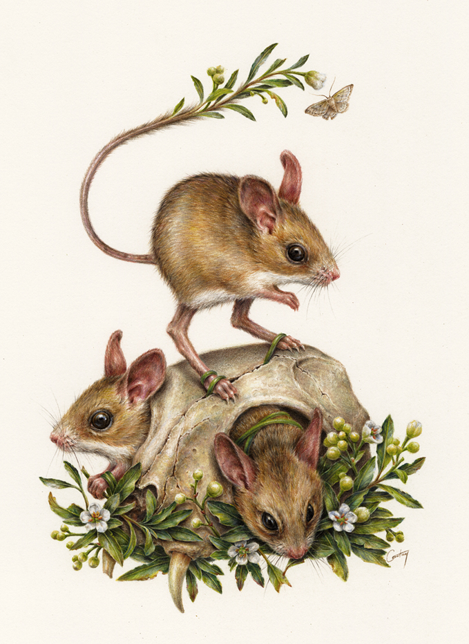 Dusky Hopping Mice