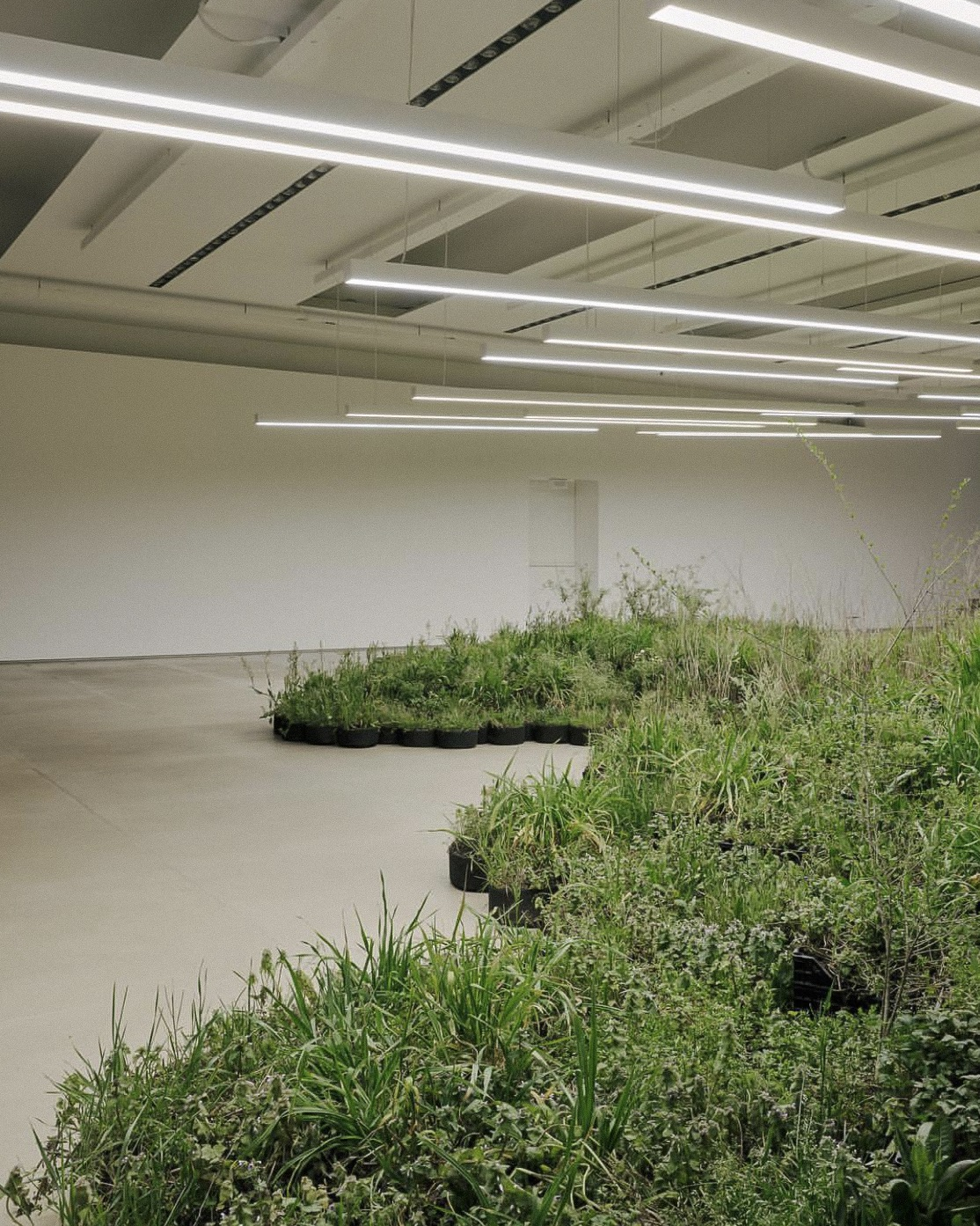 """ADJACENT FIELD, A MULTIPLE INSTALLATION BY ARTIST LINDA TEGG 