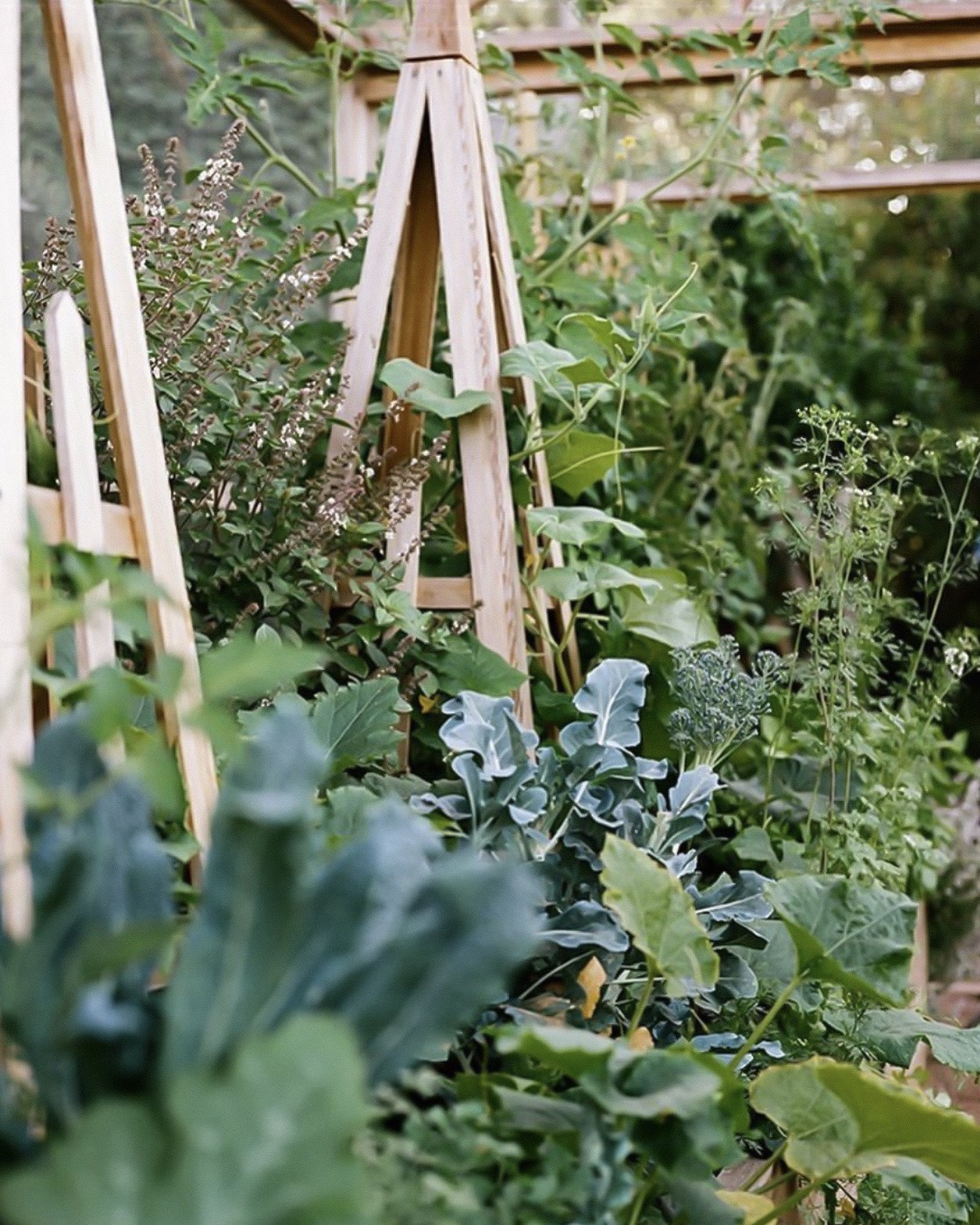 A GARDEN CAN BE ANYWHERE: CREATING BEAUTIFUL AND BOUNTIFUL EDIBLE GARDENS |  In this book Edible Gardens LA's Lauri Kranz shares tips, tricks, and insights into the building, maintenance and joy of growing food for yourself and your family. A must buy | Image Brian Ferry, via Edible Gardens LA    LINK HERE >>>