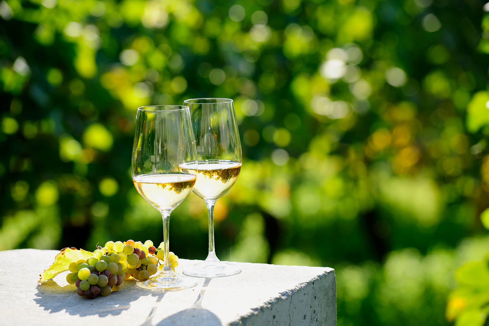 Two-glasses-of-white-wine-(Risling)-in-vineyard-157694086_6048x4032.jpg