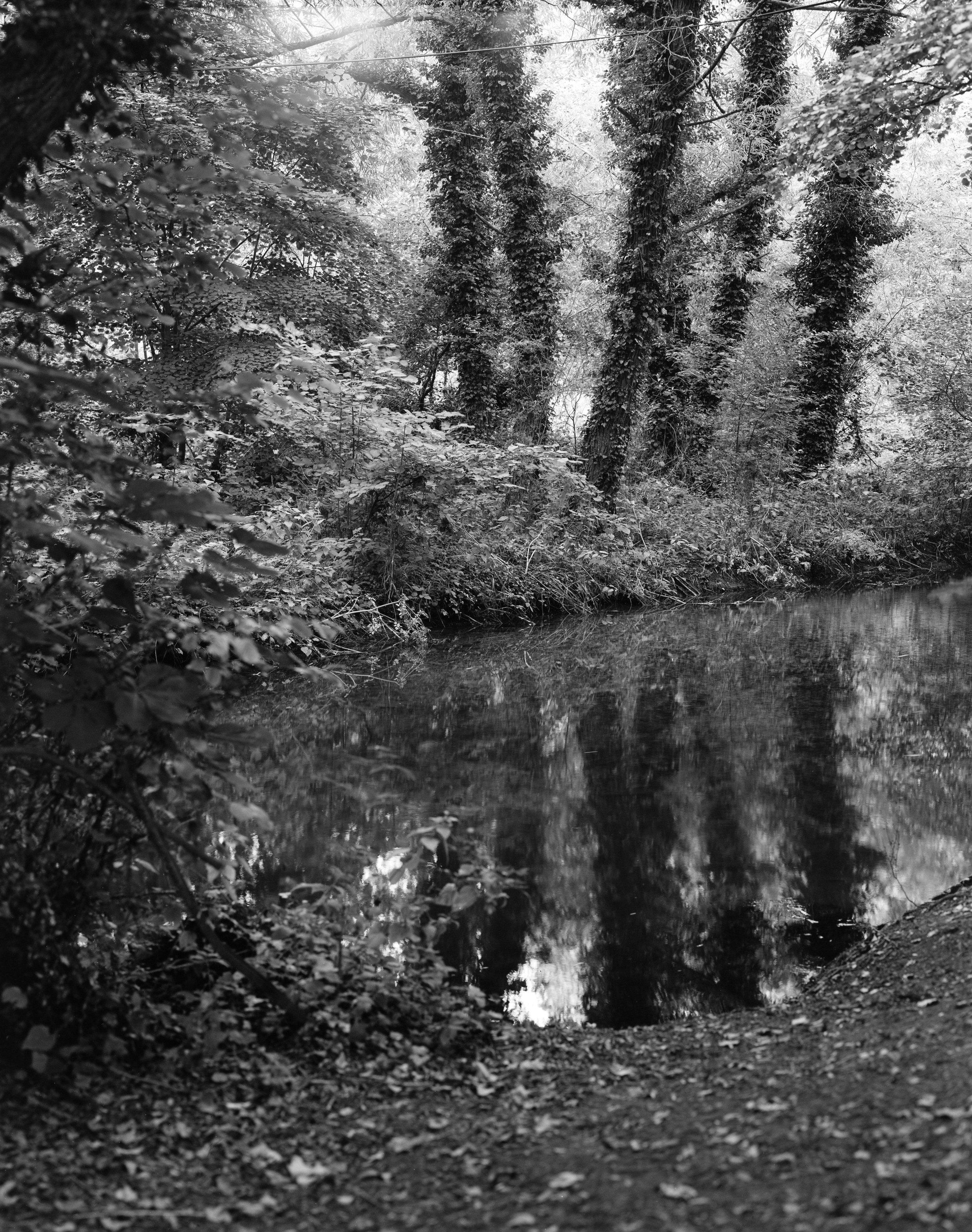 Trees reflected in the River Darent   Shen Hao TZ45-II, Schneider Symmar-S 180mm, Adox 100 CHS II
