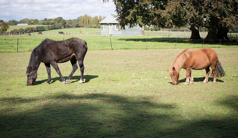 Holywell_Park_Nursing_Home_Sevenoaks_Horses_003_0508.jpg
