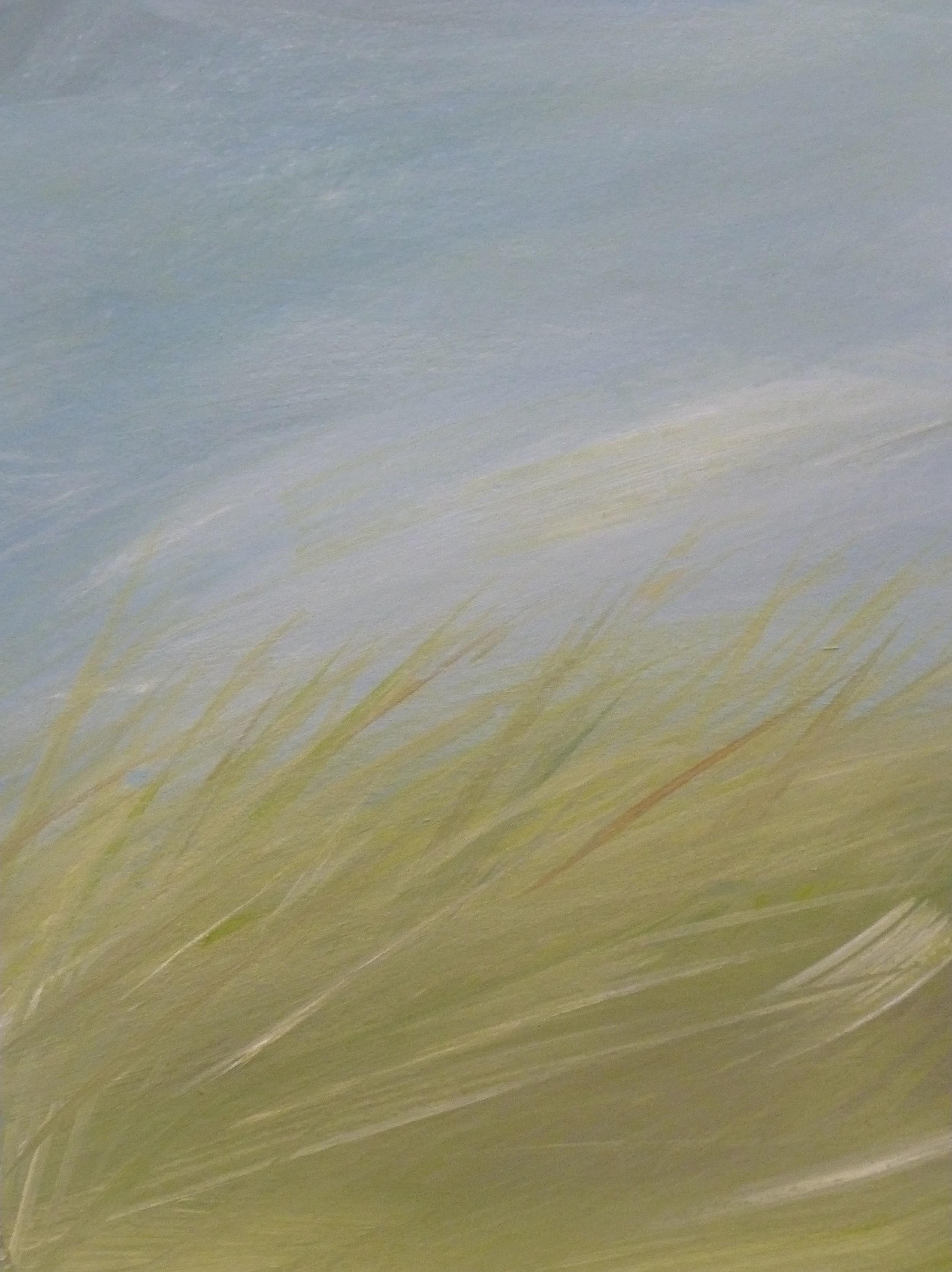 clifftop grasses