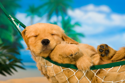 dogs-help-us-relax.jpg