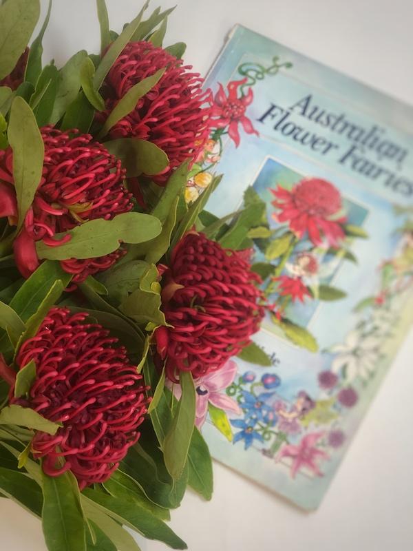 stunning red waratah with Jan Wade's Australian Flower Fairies book