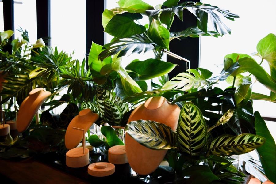 lush green foliage heralds in the start of the Darwin monsoon season