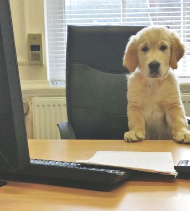 Doggy desk matt.jpg