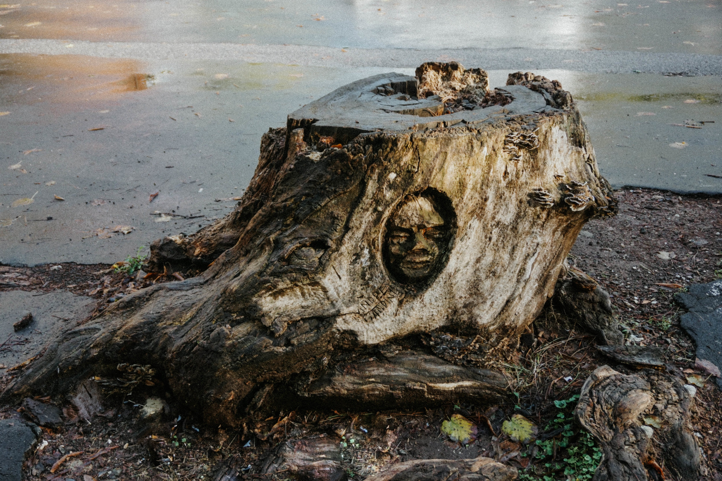 A Roman street artist carves faces into stumps around the city. | Article on him  here .