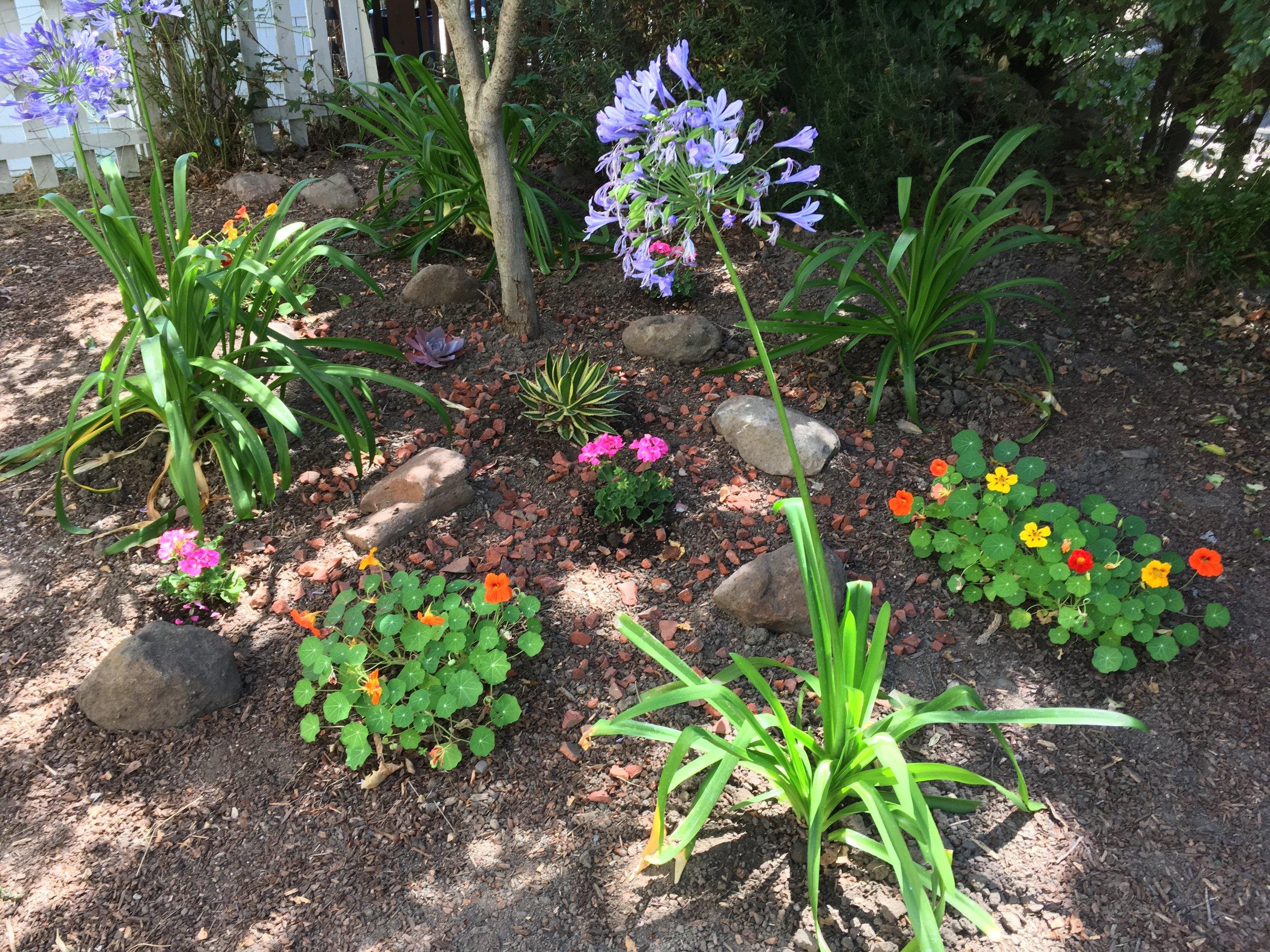 agapantha, nasturtium, and geranium with succulent, agave, and brick chips