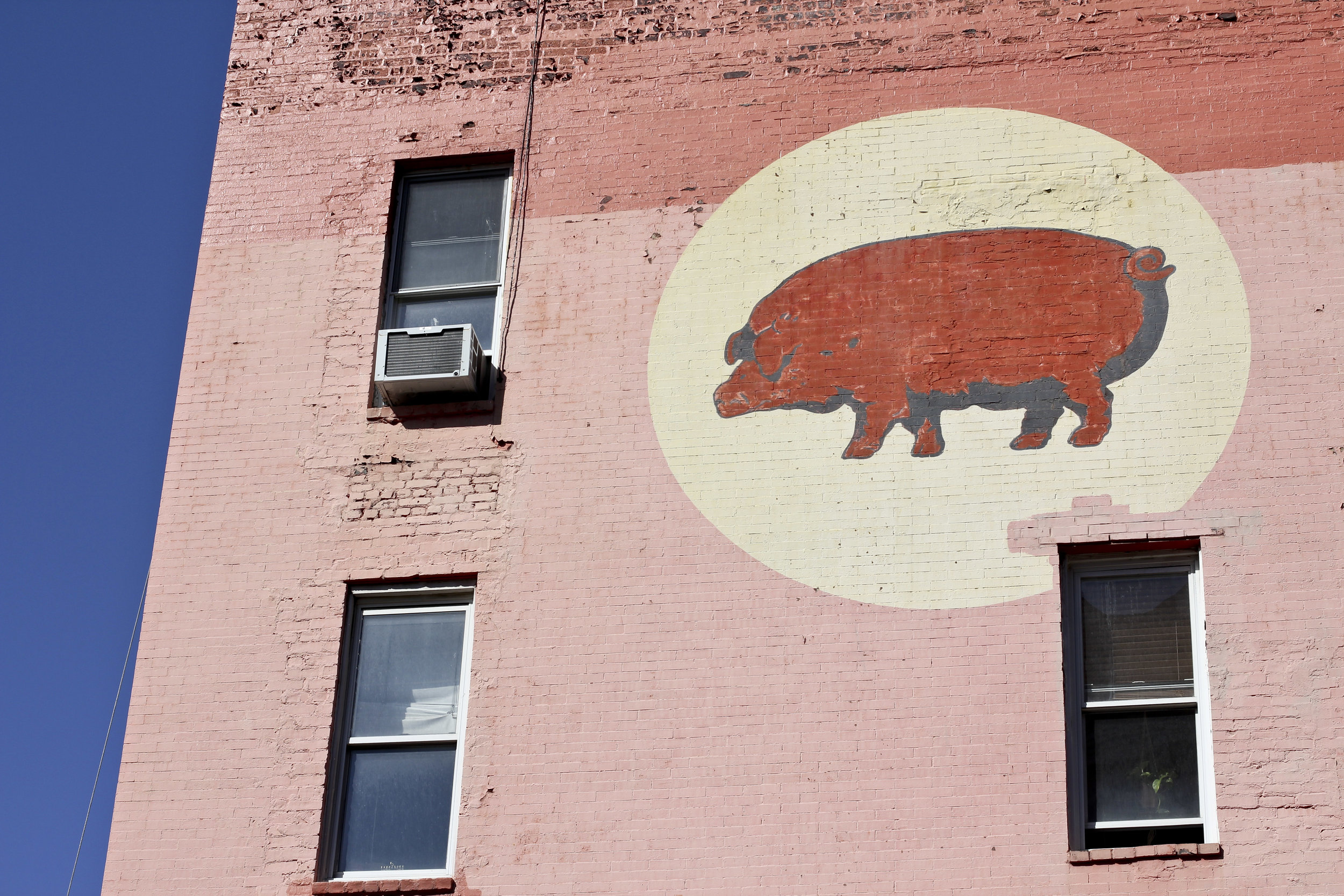 City Pig.jpg