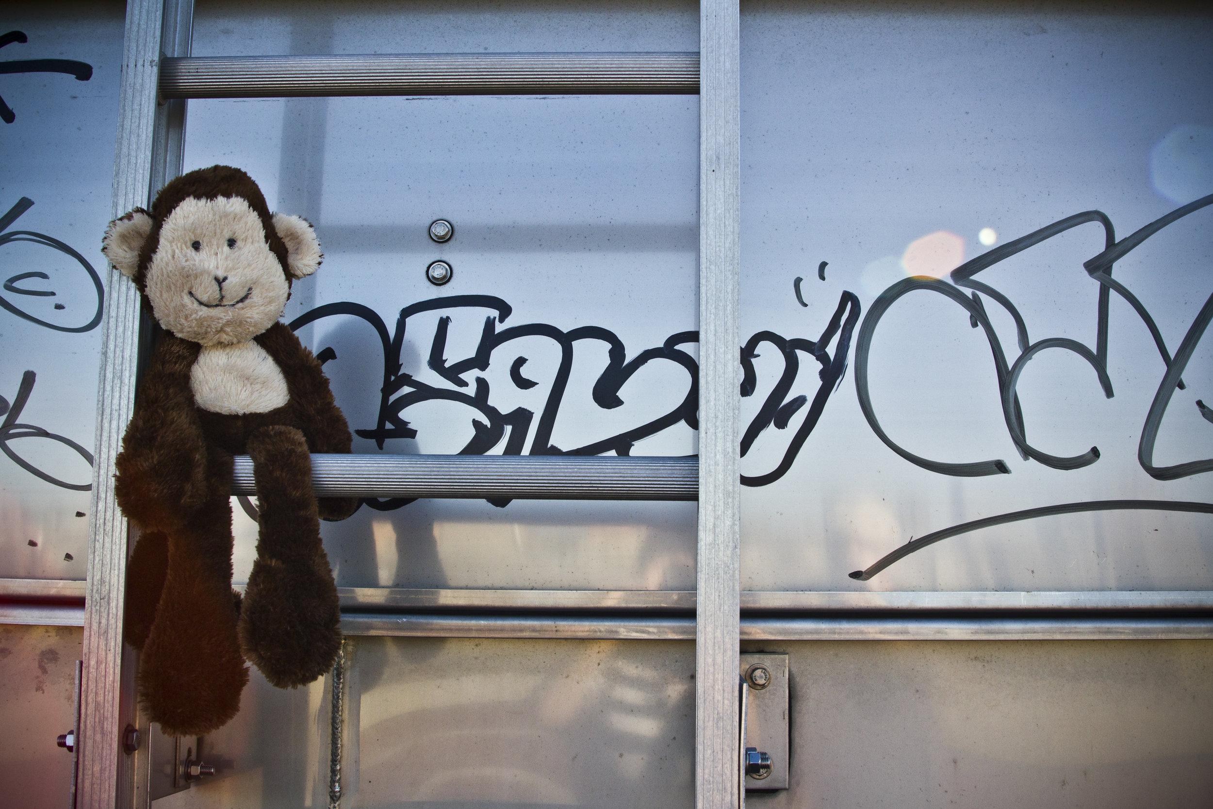 City Monkey.jpg