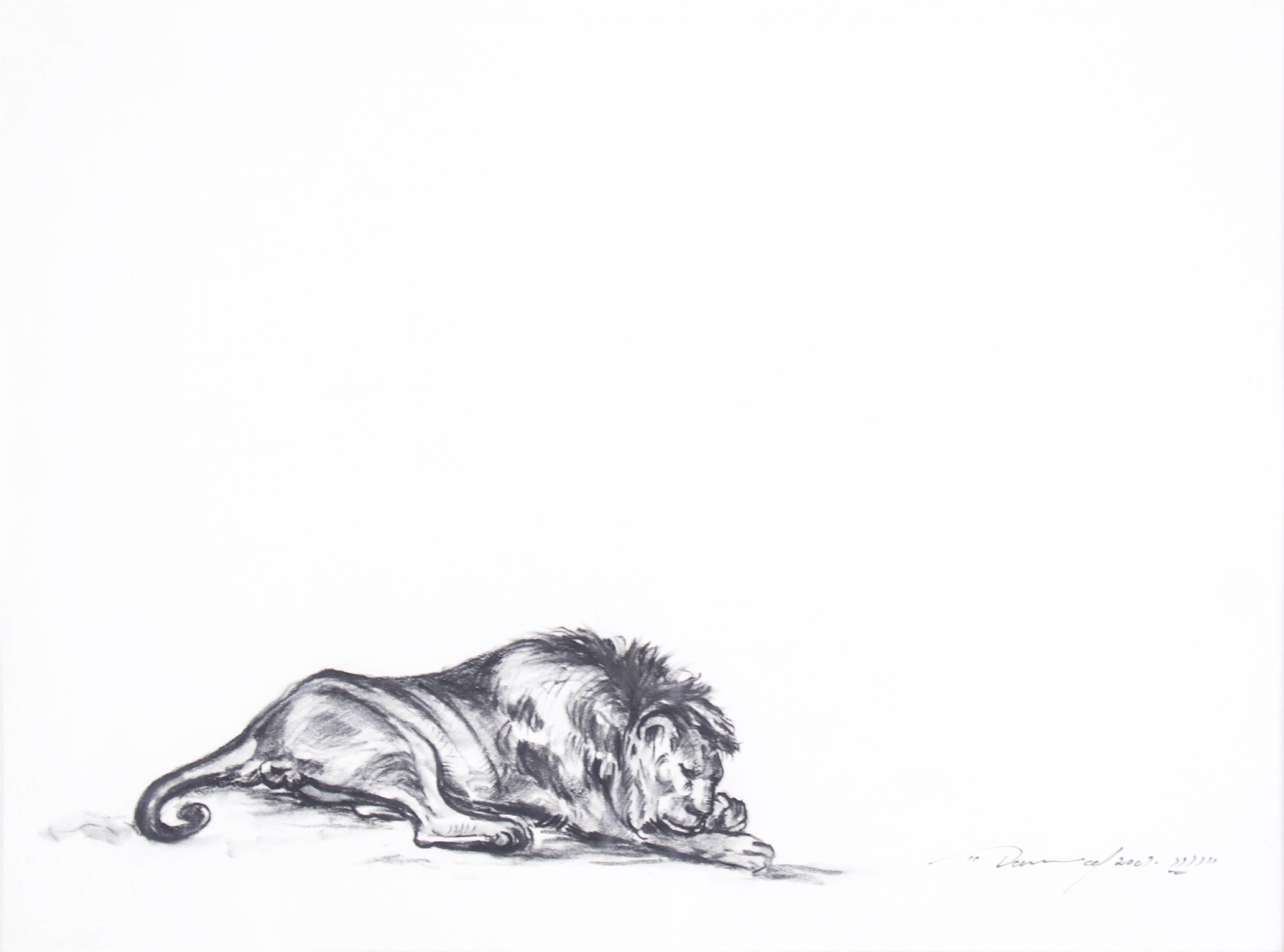 """""""Sleeping Lion""""    18"""" x 14""""    India ink on Paper"""