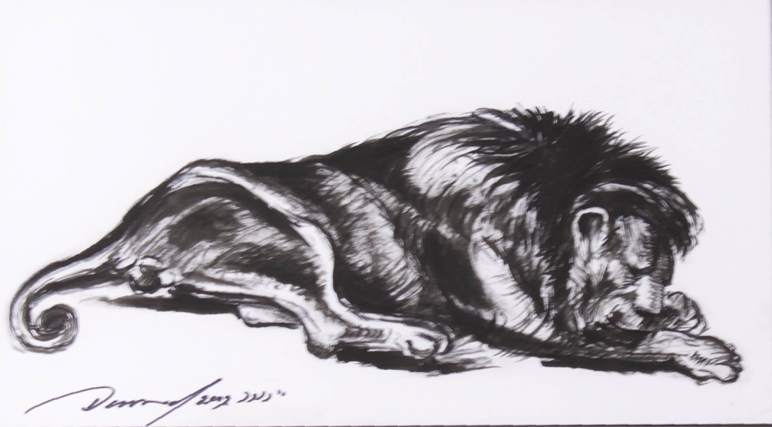 """Sleeping Lion II""    24"" x 16""    Ink on Paper"