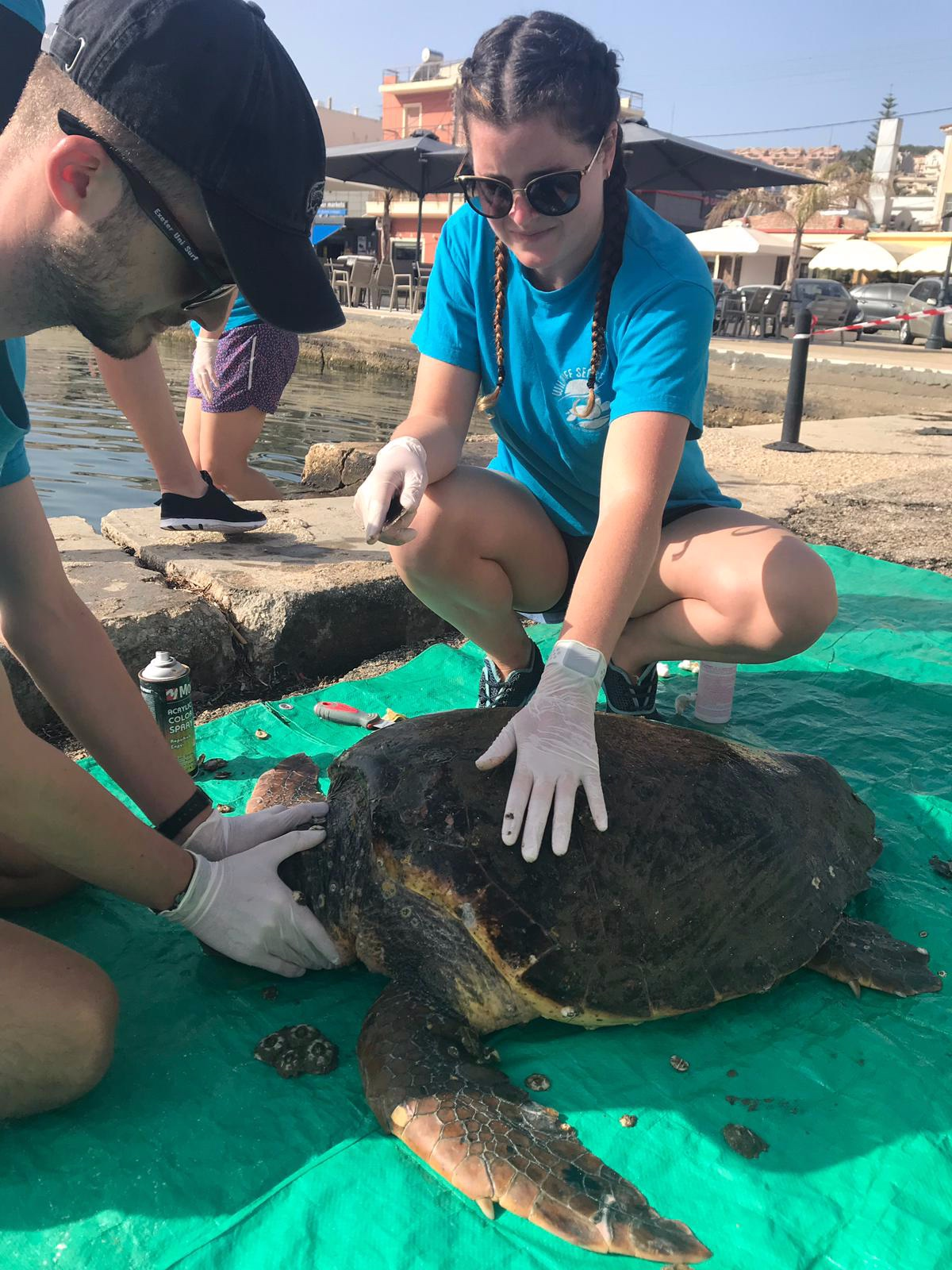 Annya at work, caring for a Green Sea Turtle.