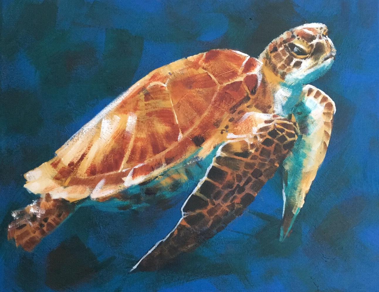 A Green Sea Turtle ©Susan Clare