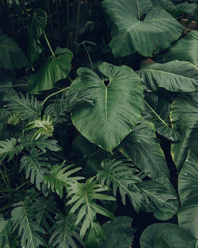 plant-vibe.jpg