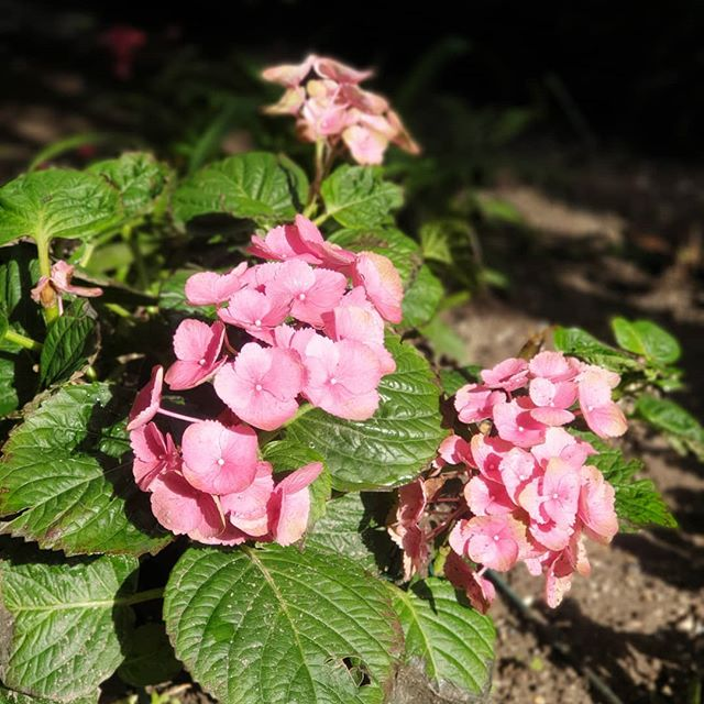 Apprezziamo la pioggia.. ma un pò di sole ogni tanto ci vuole! ☘ . . #allefronde #bedandbreakfast  #mantova #cremona #brescia #gardalake #gardens #gardening #gardenlovers #nature #naturephotography #gardalake #tourism #hospitality #primopiano #flowers #flowerstagram #colours