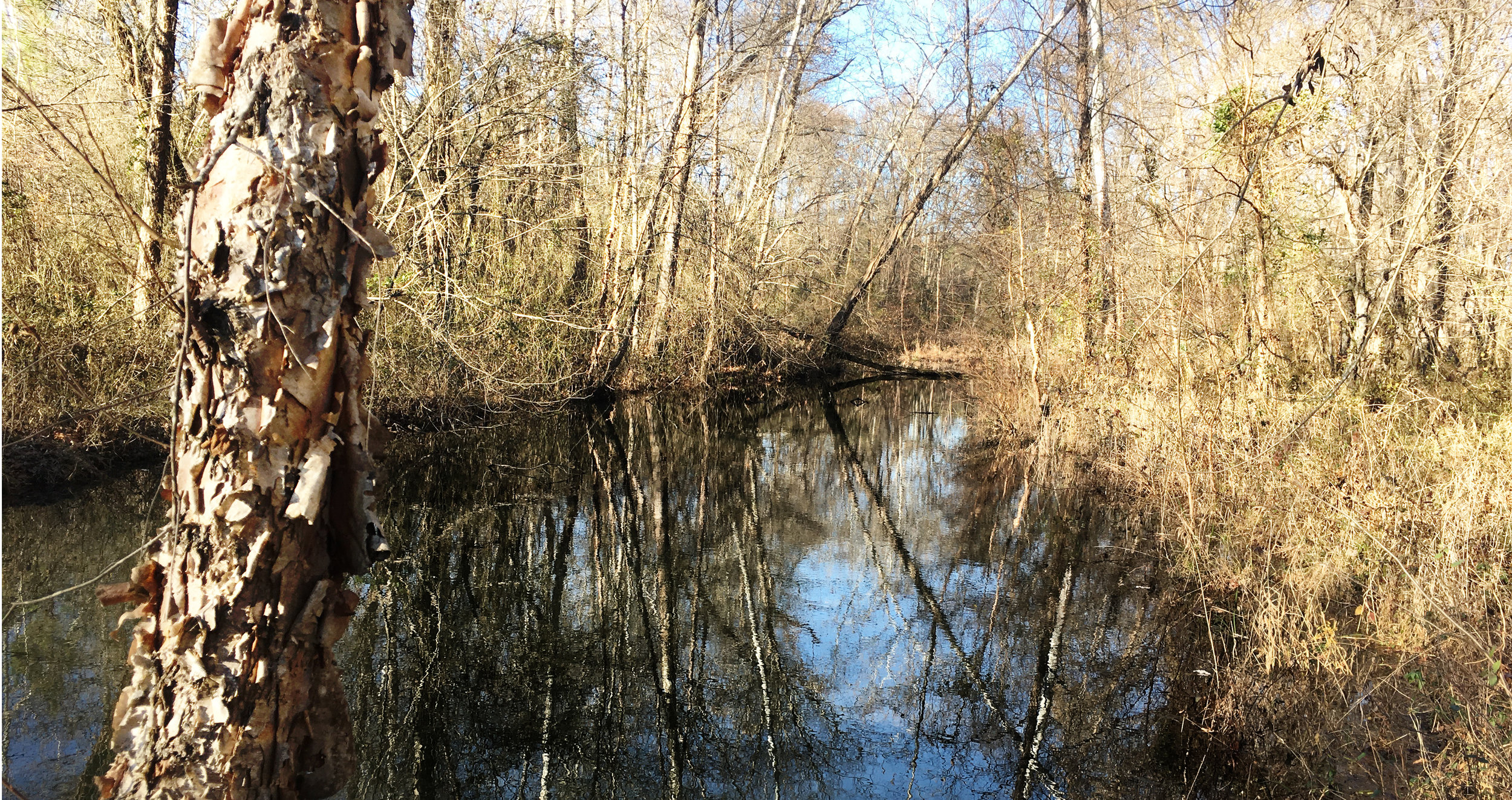 lickinghole_creek.jpg