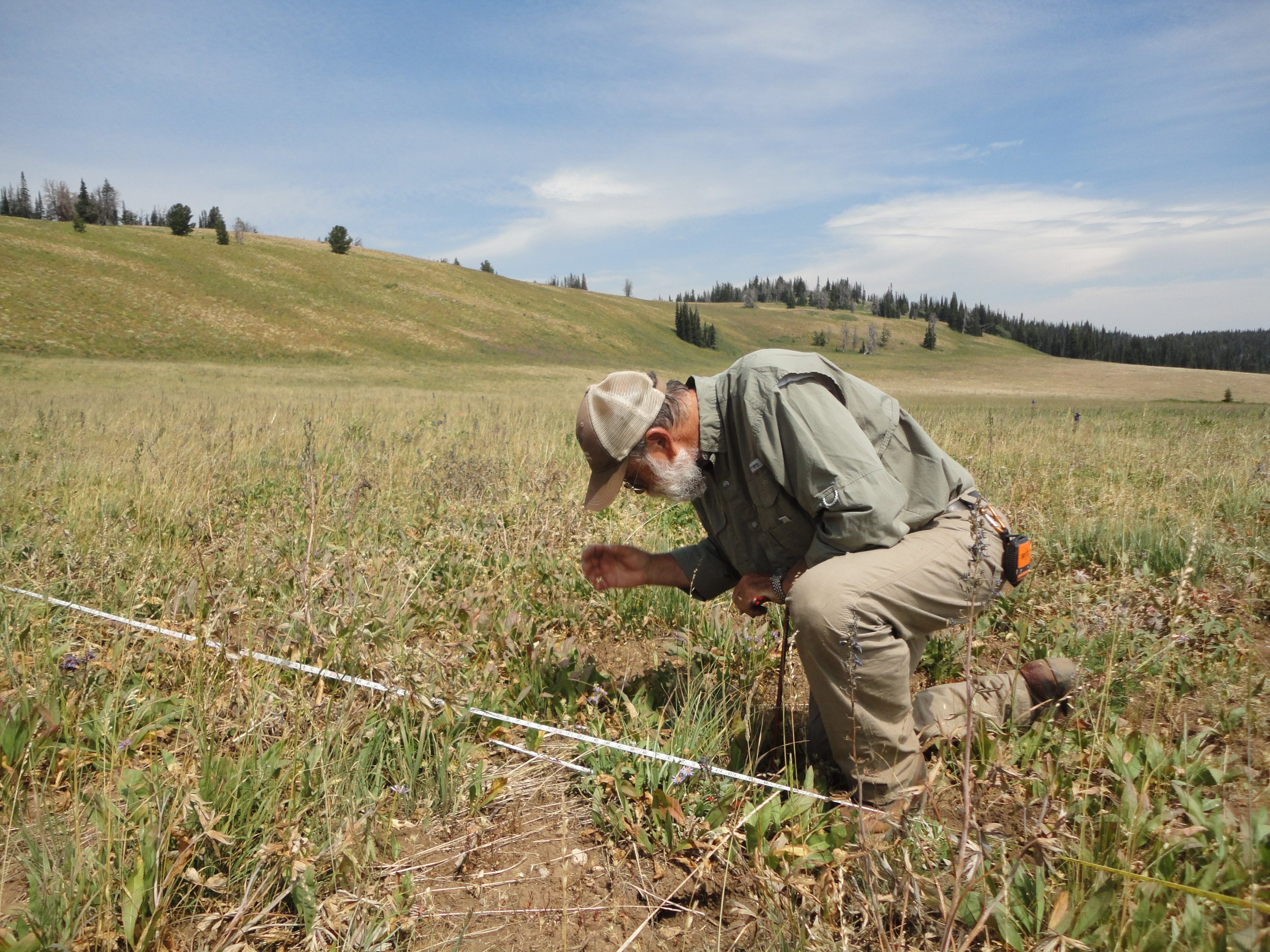 Chuck Butterfield, PhD with Y2 Consultants identifies plant species during rangeland monitoring. Photo credit: Robb Sgroi.
