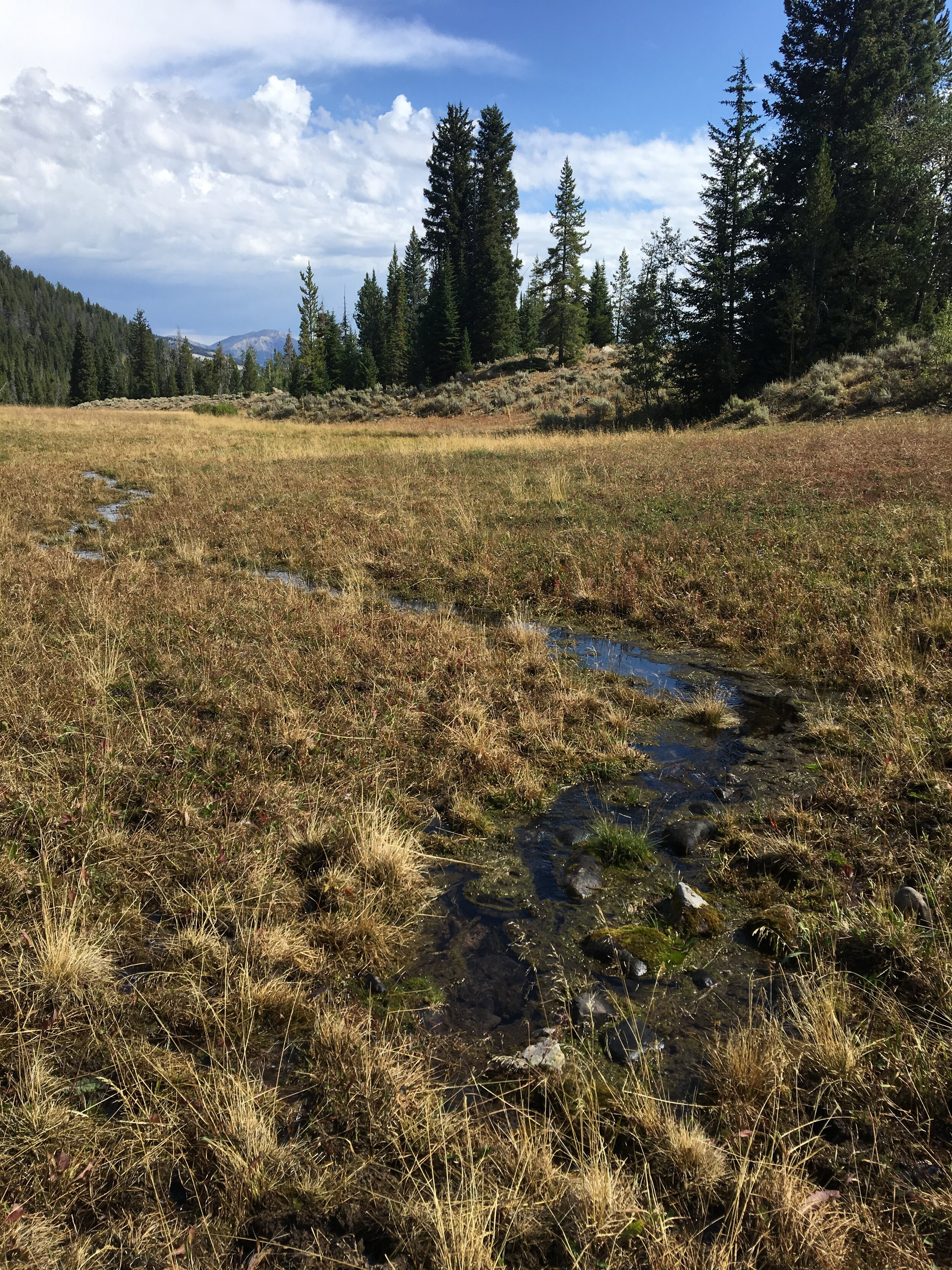The spring that appeared at the West Miners Creek monitoring plot.