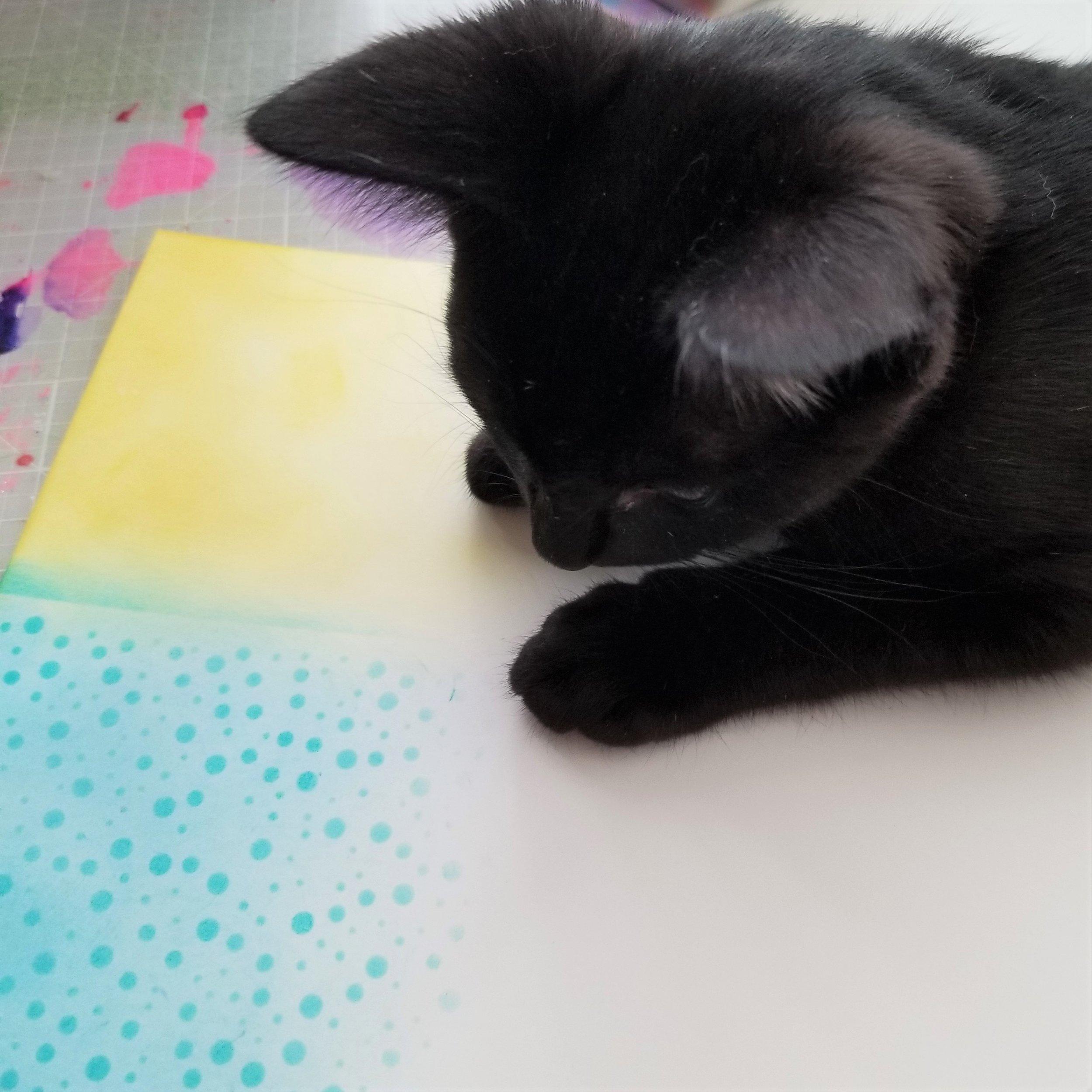 ABNH July Kitten 3.jpg