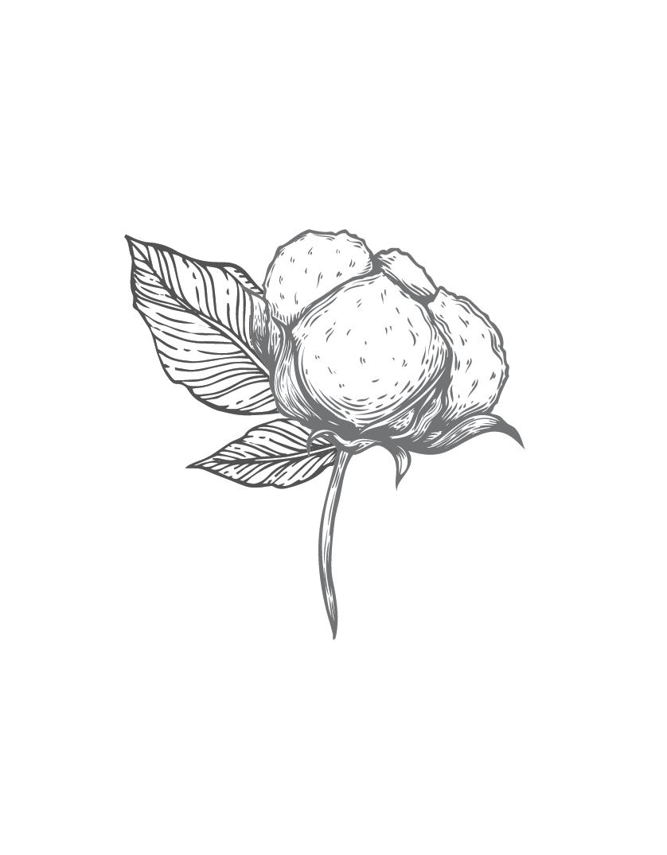 cotton 1.png
