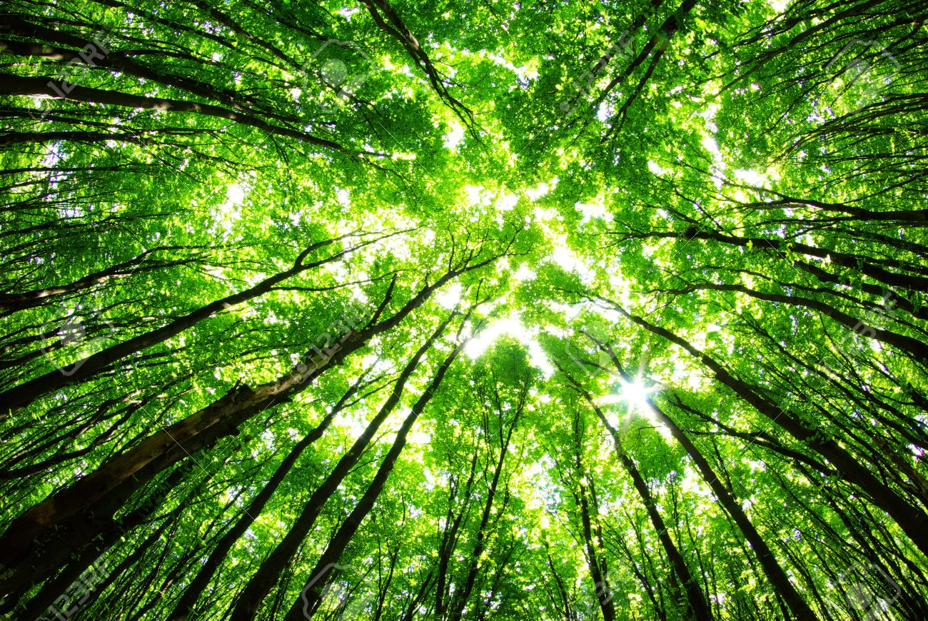 11526094-green-forest-background-in-a-sunny-day-Stock-Photo.jpg
