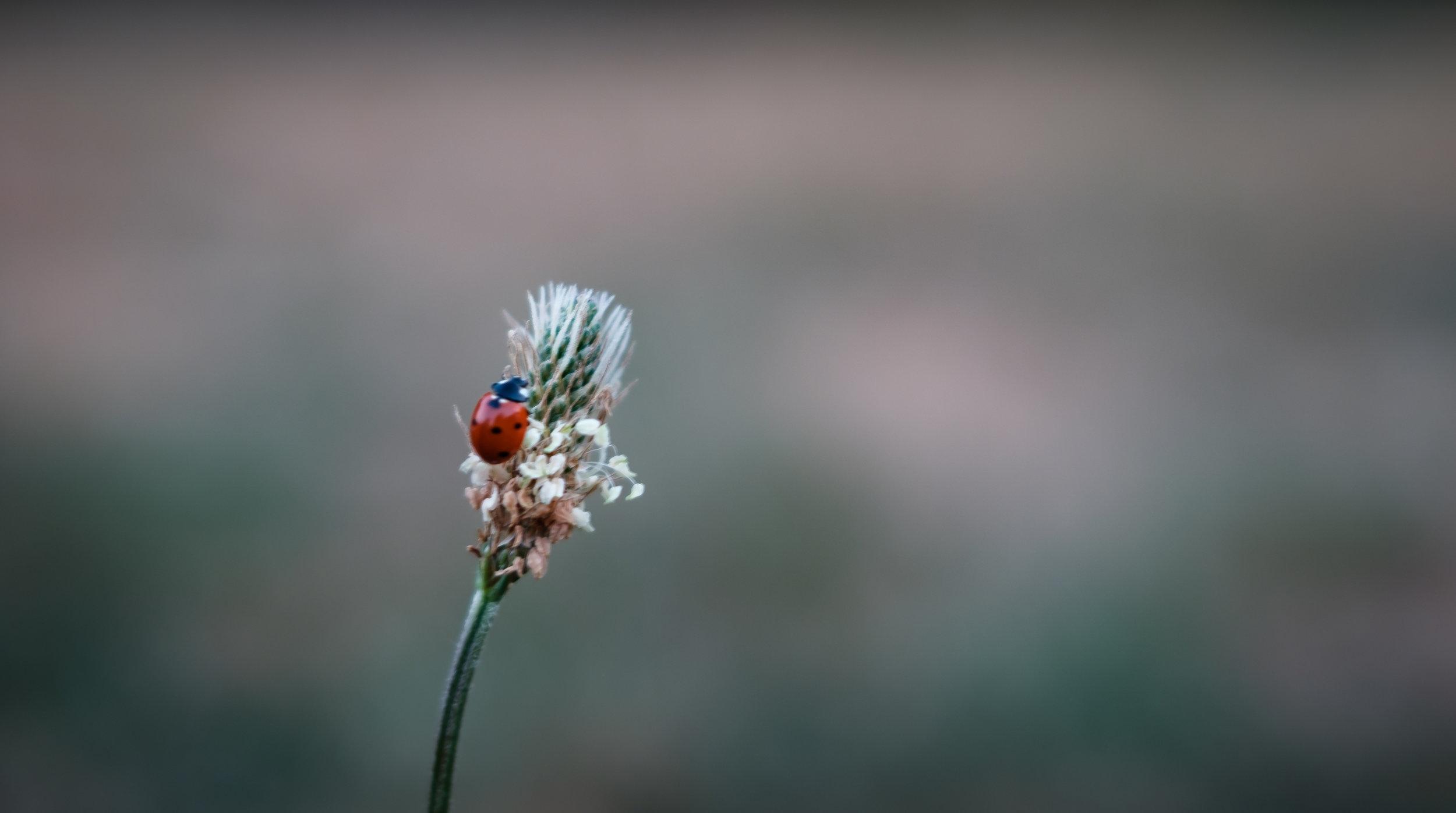 Lady Bird - Porchester, UK