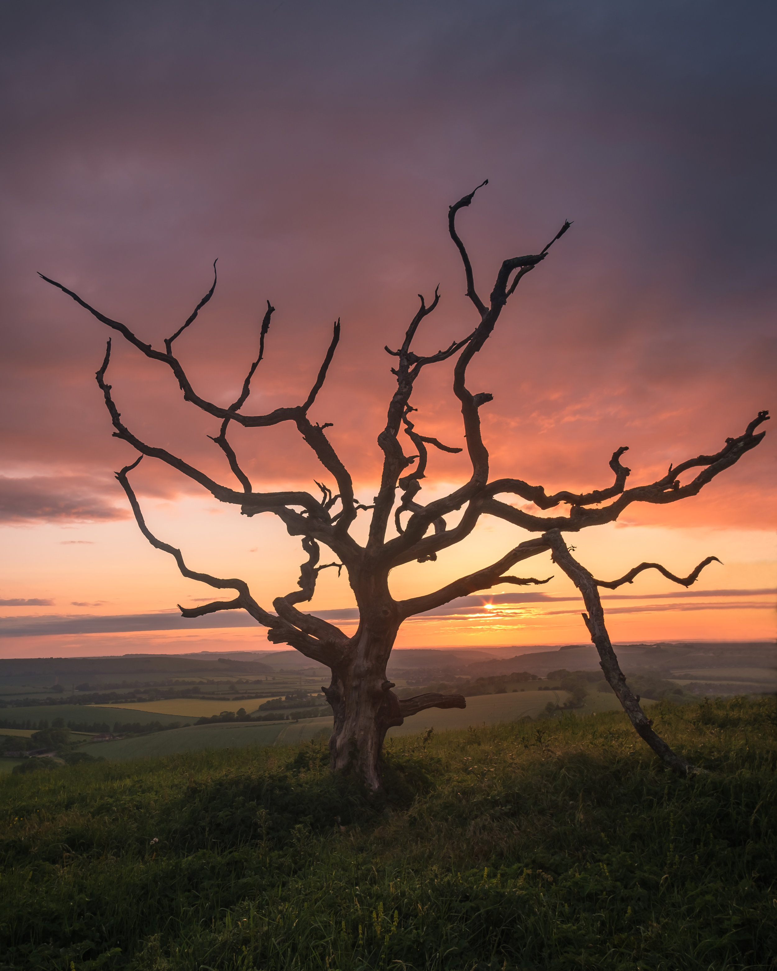Sunset at the old tree - Hampshire