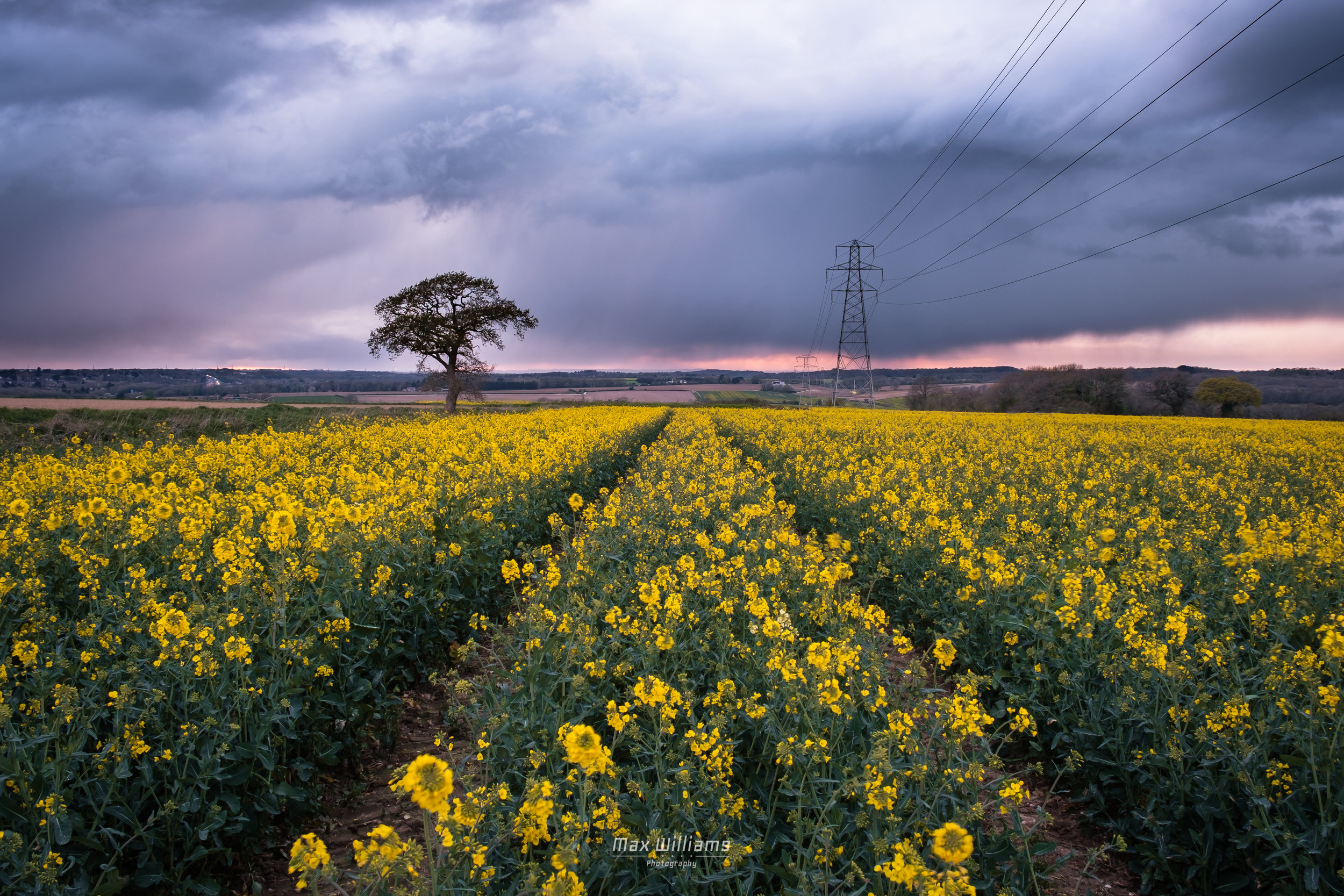 Rapeseed Fields - Portsmouth